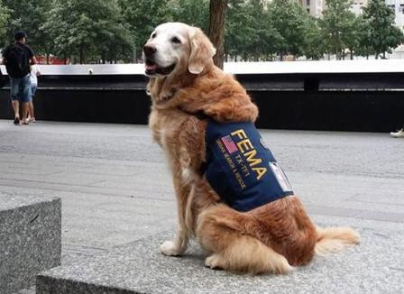 Morto Bretagne cane cerca sopravvissuti