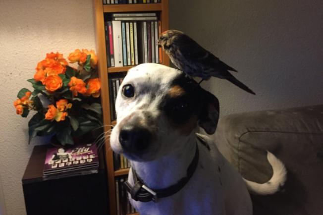 Cane salva passerotto, l'uccellino per riconoscenza gli si posa in testa