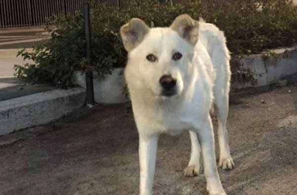Angelo cane seviziato e ucciso: condanne esemplari per gli autori delle barbarie