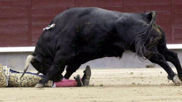 Corrida, morto Ivan Fandino, il torero incornato in Francia